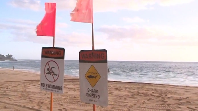 California woman bitten by shark in Hawaii after knocked from kayak