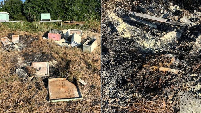 Beehives in Texas attacked, set on fire, killing half a million bees, officials say