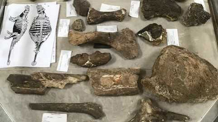 New spike-armored dinosaur discovered in Texas