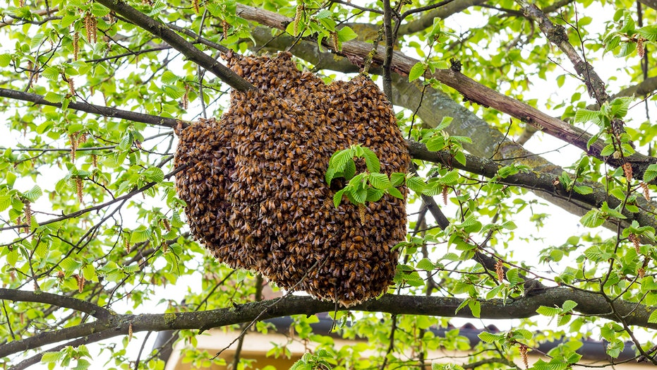 Arizona mom attacked by bees after beehive falls on her: 'I heard ...