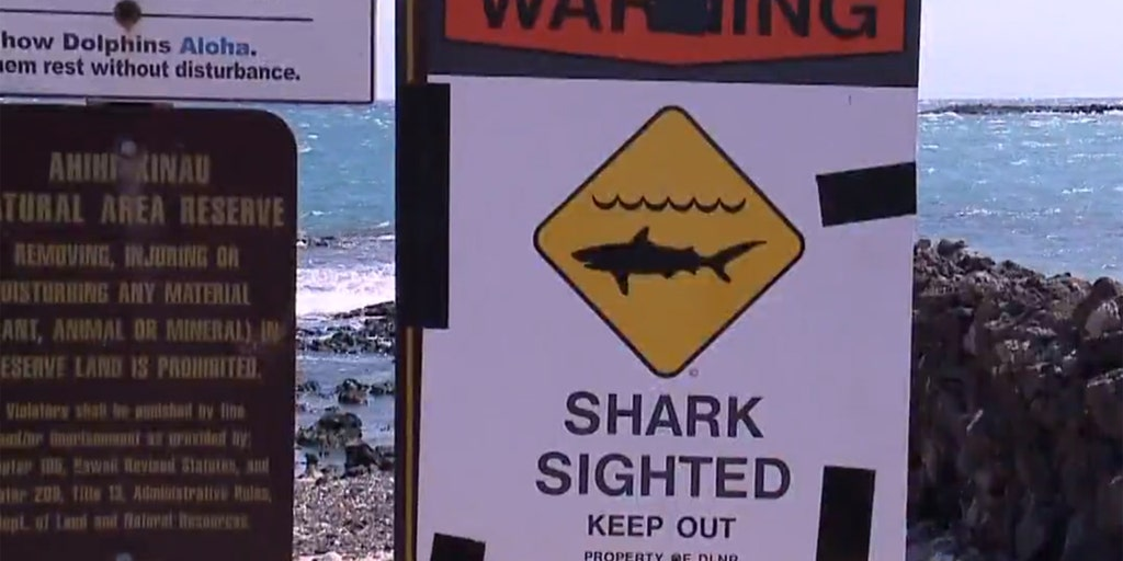 Image result for Tourist who died in gruesome shark attack was recently retired