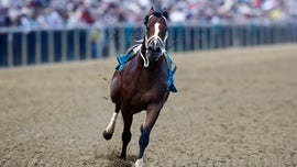 Bodexpress throws jockey, steals the spotlight at Preakness Stakes