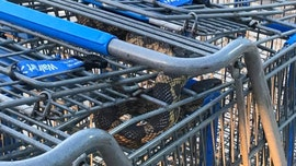 Large rat snake discovered hiding in shopping carts at Walmart in Texas