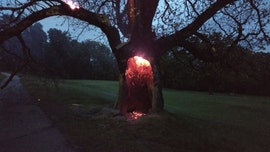 Tree apparently struck by lightning in Massachusetts, leaving spectacular smoldering sight