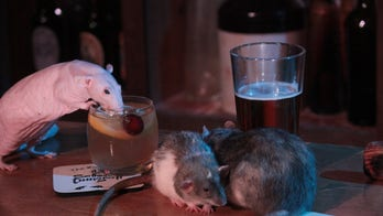 San Francisco Dungeon launching 'Rat Bar' pop-up where you can pay to drink with live rodents