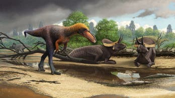 Amazing dino discovery: Fossil of tiny Tyrannosaurus rex 'relative' found