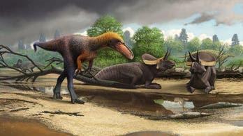 Amazing dino discovery: Fossil of tiny Tyrannosaurus rex 'relative' found