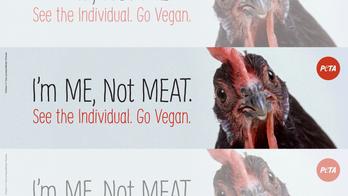 PETA planning to put 'tribute' billboard at site of Iowa truck crash that killed 2,500 chickens