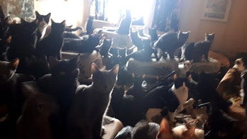 Hundreds of cats discovered inside Toronto apartment in 'perilous hoarding situation'