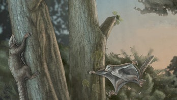 Fossils of the first winged mammals dating back 160M years, discovered