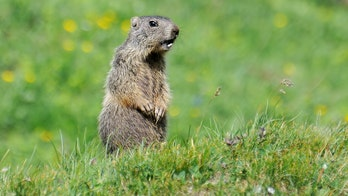 Mongolian couple die of bubonic plague after eating marmot, triggering quarantine