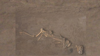 Dogs sacrificed by Shang Dynasty were just pups. Some were even buried alive.