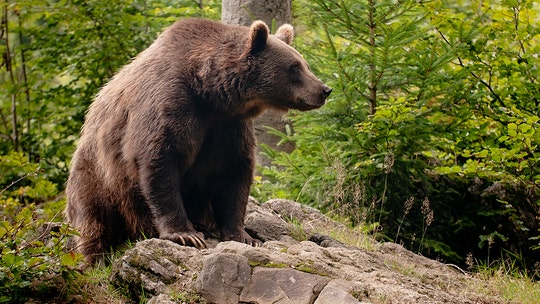 'Summit of the bear' held between Spain and France after bears attack sheep
