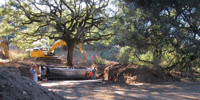 This photo shows the 180-year-old heritage oak tree being excavated from an easement property in Sonoma, Calif.