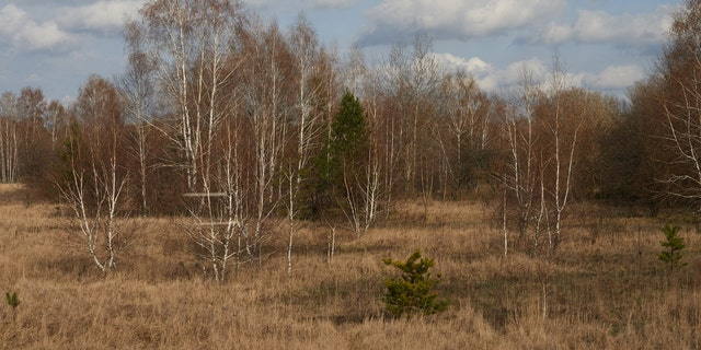 File photo: Part of the Red Forest, which was formerly known as the Wormwood Forest.