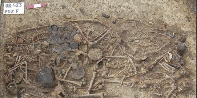 Researchers have found that the 15 skeletons found in this 5,000-year-old grave site were all related to one another. The burial site was found in 2011near the village of Koszyce in southern Poland.