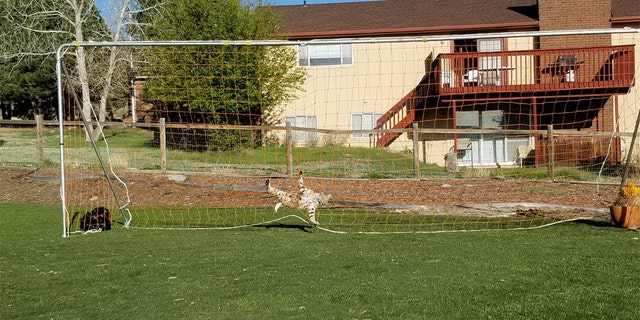 Officials are warning locals to remove their soccer nets when they're not in use for this reason.