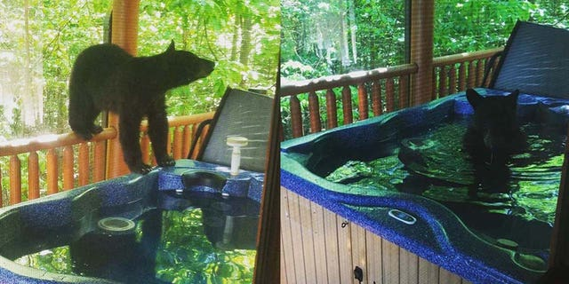 According to Strickland, one of the cubs hopped into the bubbling hot tub, and even closed its eyes in relaxation.
