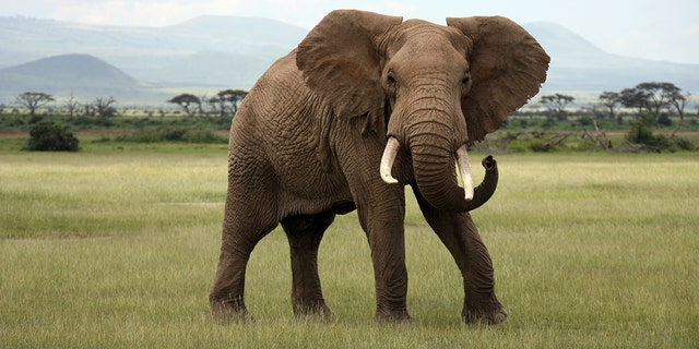 Zimbabwe has sold 97 elephants to China and Dubai over a six-year period, earning $2.7 million, an official revealed Monday.