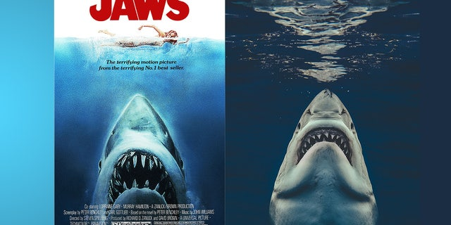 """A picture taken by Euan Rannachan for Magnus News is seen at right. The famous poster for """"Jaws"""" is seen at left."""