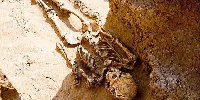A skeleton uncovered by researchers in Russia. (East2West)