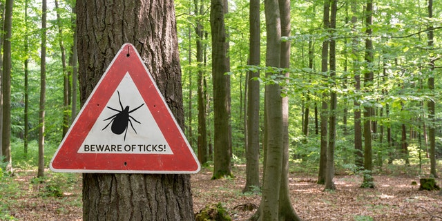 Don't go bushwhacking or run off into a brushes.
