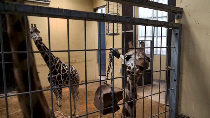 Animal rights activists score win at Barcelona zoo
