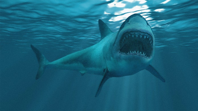Great white shark, 10-feet long, 500 pounds, detected in Long Island