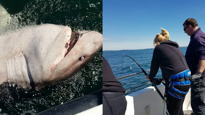 Fisherwoman reels in 1,200-lb shark after 90-minute struggle