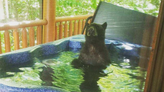 Vacationing couple shocked to find a bear in their hot tub
