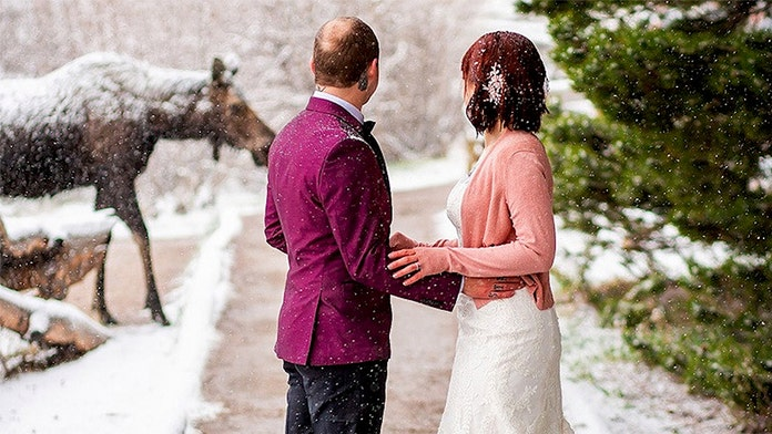Moose crashes snowy Colorado elopement, provides no objections to the secret union