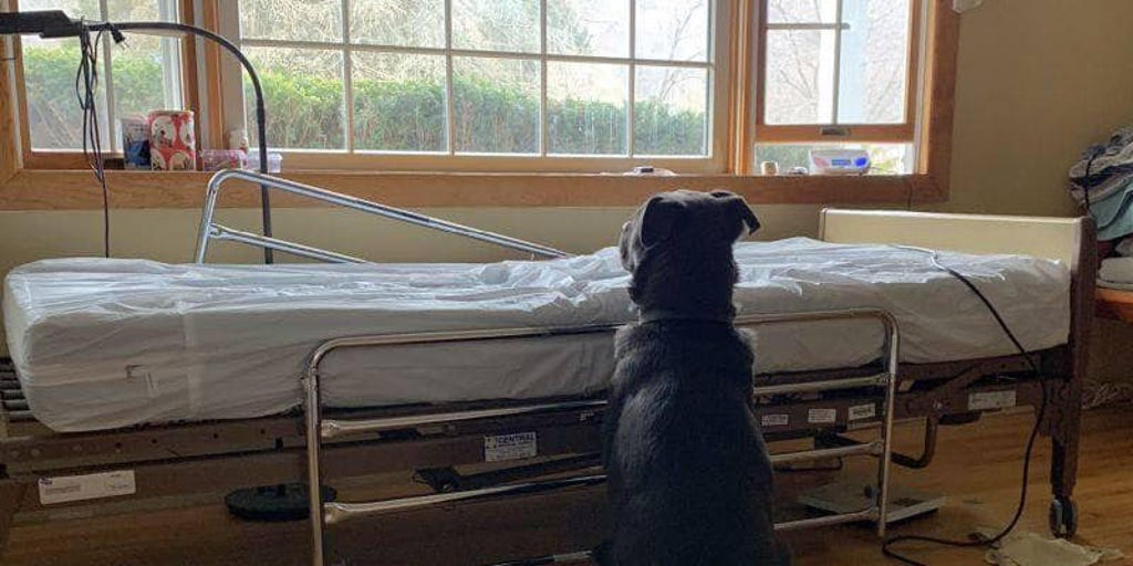 huge selection of 8d4e4 2bc3f Dog pictured waiting for dead owner near empty hospital bed ...