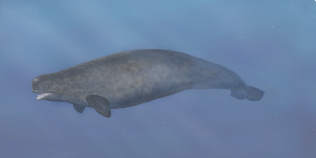 First-ever beluga-narwhal hybrid found in the Arctic