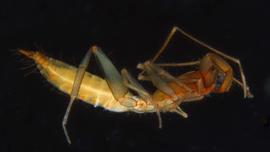 Why these strange, reclusive arachnids fled underground in evolutionary waves