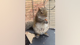 In video, Alabama man denies feeding meth to squirrel