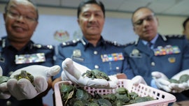 Malaysia authorities seize 5,255 tiny turtles and drugs at Kuala Lumpur airport