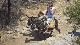 PETA accuses Greek officials of hiding tourist-related donkey abuse