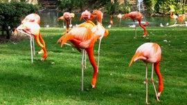 Florida man hit, killed by truck weeks before trial in beloved flamingo's death