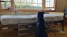 Dog pictured waiting for dead owner near empty hospital bed gets adopted