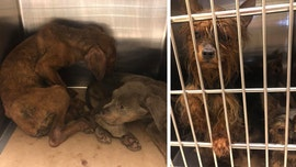 52 dogs rescued from alleged hoarder in New Jersey, officials say