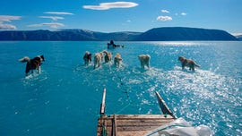 Stunning photo shows dogs 'walking on water' amid Greenland ice crisis