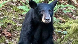 Oregon bear put down after people feed him, take selfies, officials say