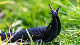 Japanese railway says dead slug responsible for chaos that delayed 12,000 train passengers
