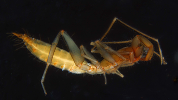 Why these strange, reclusive arachnids fled underground in evolutionary waves