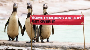 London Zoo plans Pride celebration with resident gay penguins