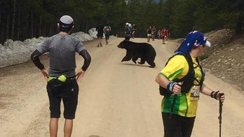Bear halts Colorado marathon by crossing the road