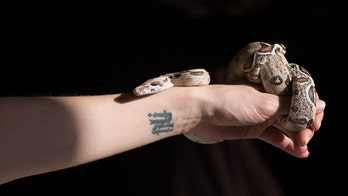 Snake massages are a thing, but enjoy at your own risk