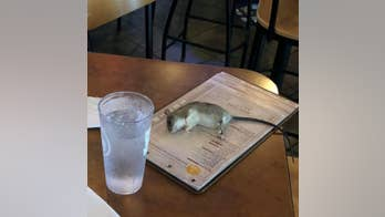Buffalo Wild Wings customers shocked as rat falls from restaurant ceiling