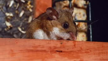 New Mexico woman dies from virus linked to rodent droppings