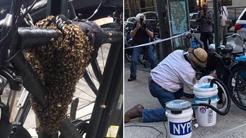 New York City police remove colony of bees swarming bike in Manhattan